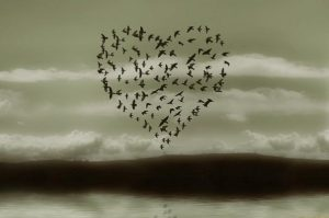 cuore-di-uccelli-in-volo